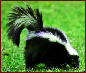 ALL PURPOSE SKUNK OFF