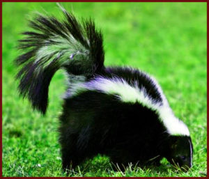 YOU MESS WITH THE SKUNK YOU GET THE SMELL